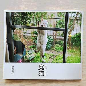 猫好きさん集まれ庭猫 (日本語) 単行本2015/9/11 安彦幸枝 (著)