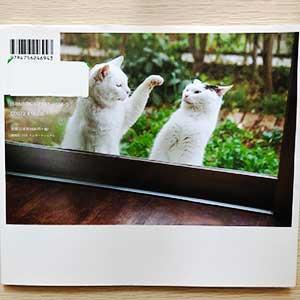 庭の常駐猫アフとサブは自由な外猫、網戸に張り付いていたて「ご飯はまだか」と通いねこに。毎日欠かさず張り付くようになる。家で飼う猫と庭に住み着いた猫、飼い主の日常。家族と猫写真集